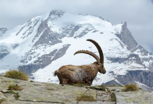 Vacanze di Capodanno in Valle d'Aosta